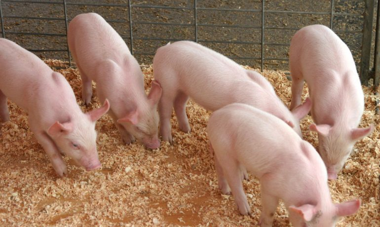 Five Things You Should Know About the Pork Checkoff