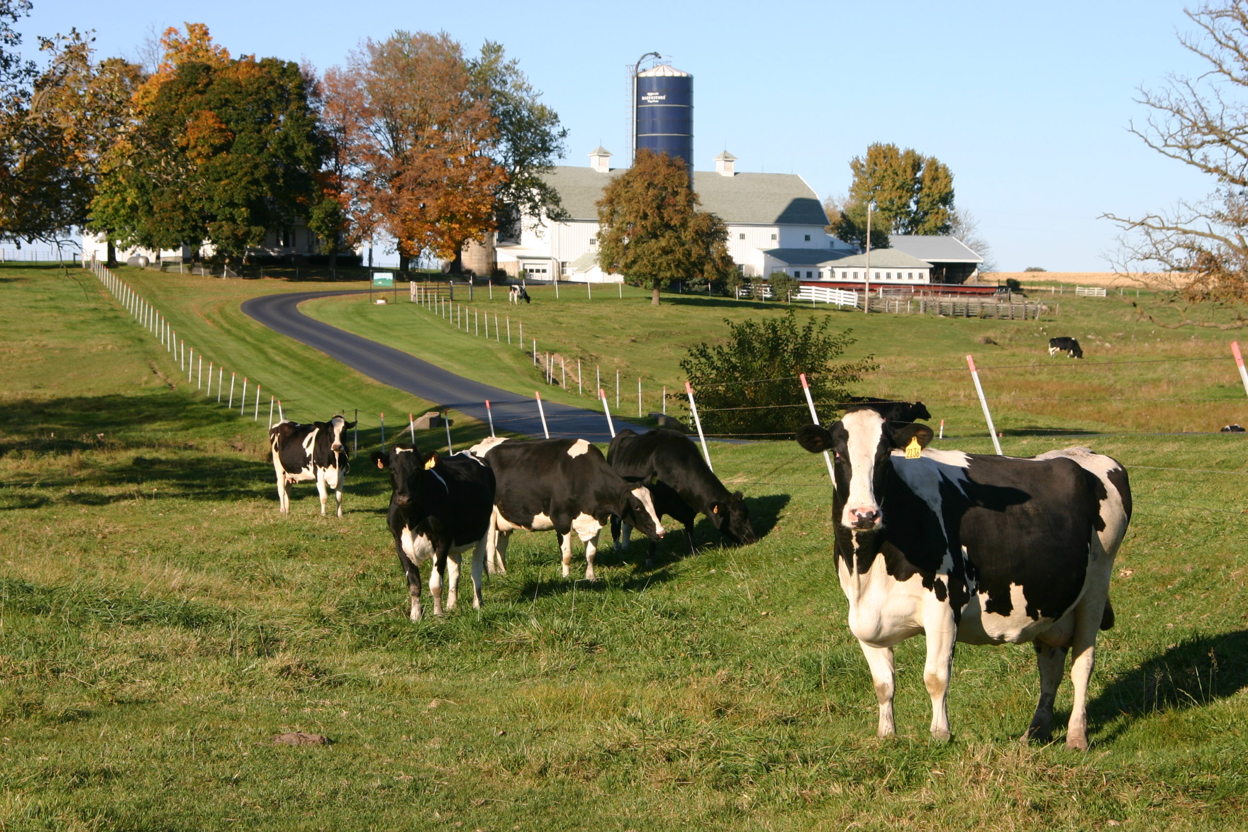 Usda Rual Development High Milk Prices Still Keeping Dairy Cows In The Herd