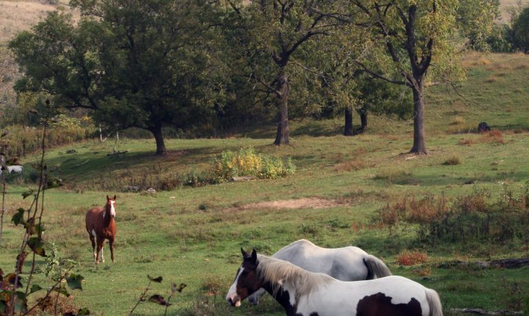 St. Croix County Horse Contracts West Nile Virus; Wisconsin Horse Owners Urged to Vaccinate