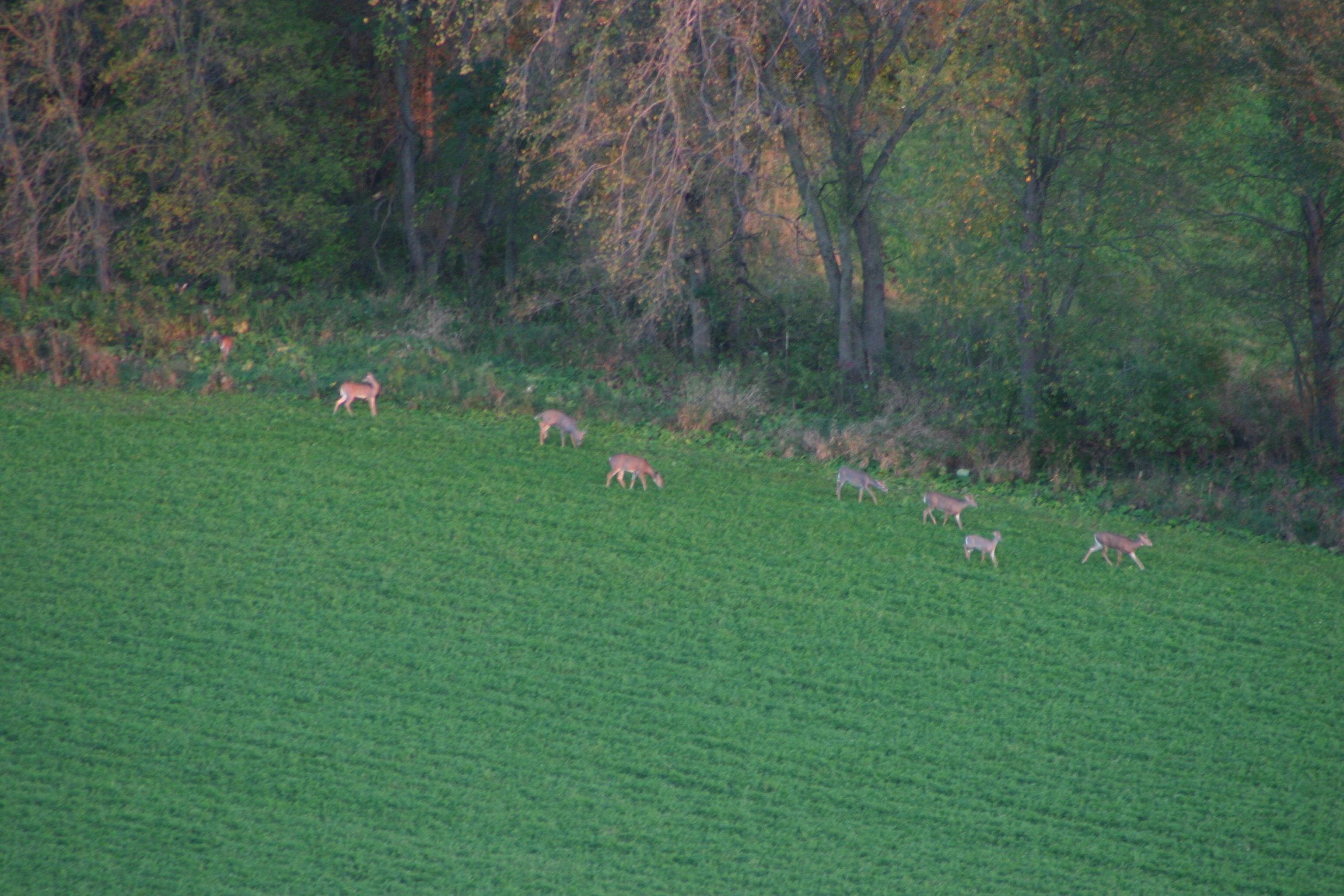 Hunters Landowners Must Heed Trespass Law Wisconsin