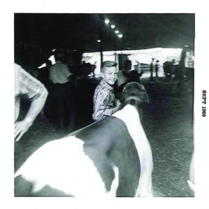 Sept 60 Show Cattle