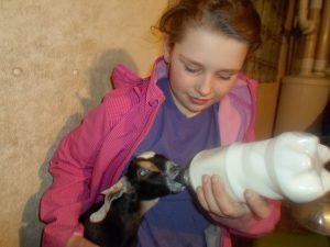 Anna feeding a goat