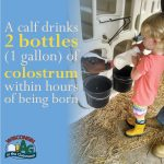 June Dairy Month Facts2