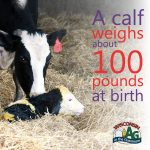 June Dairy Month Facts3