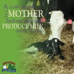 June Dairy Month Facts4