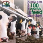 June Dairy Month Facts5