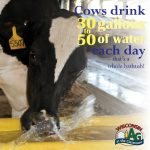 June Dairy Month Facts6