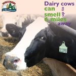 June Dairy Month Facts7