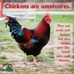 Poultry Facts