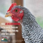 Poultry Facts2