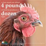 Poultry Facts4