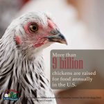 Poultry Facts5