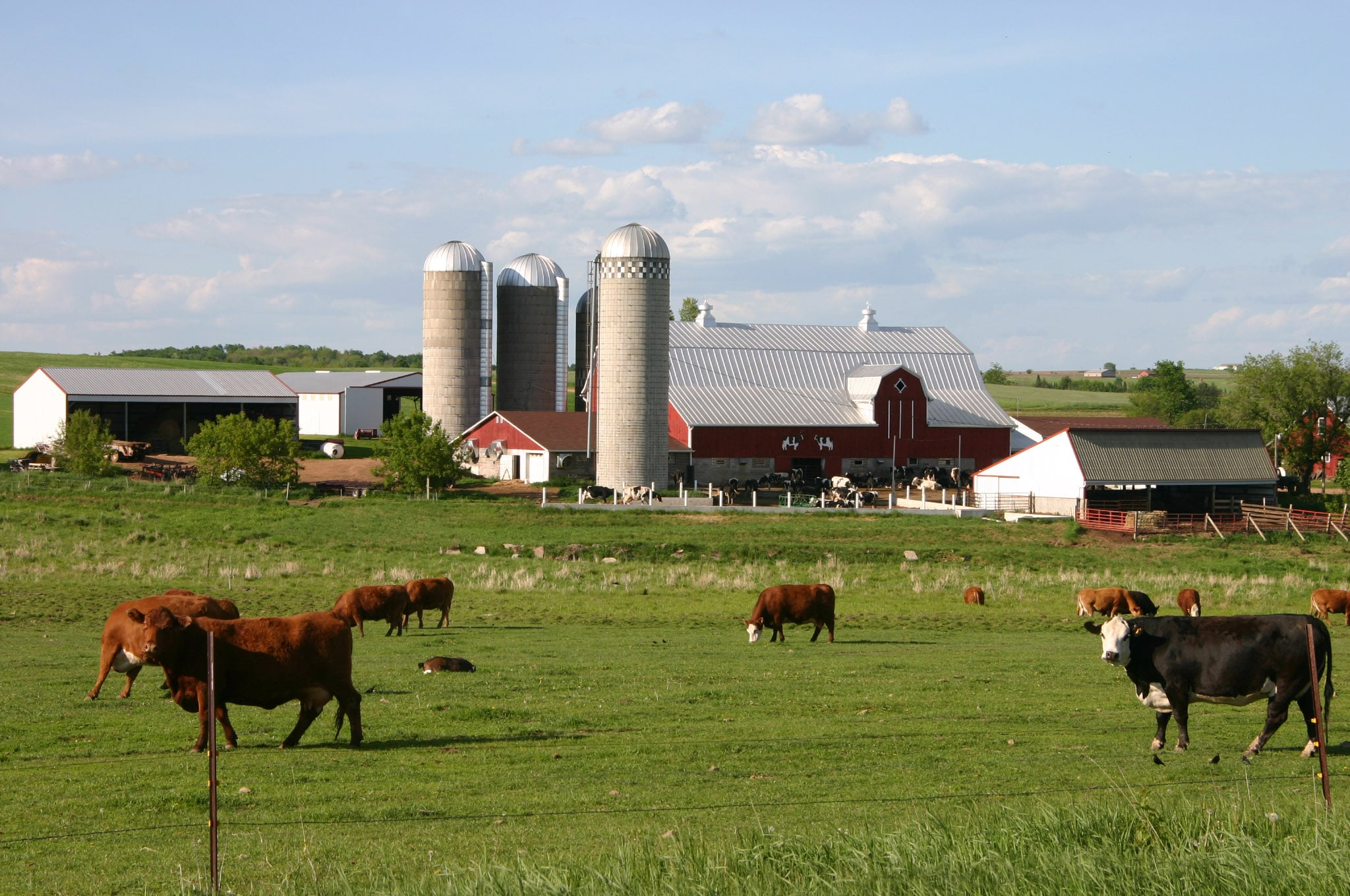 Beef and dairy farm