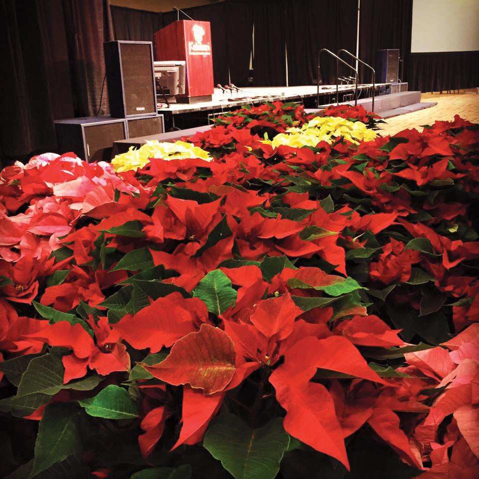 annual-meeting-poinsettias