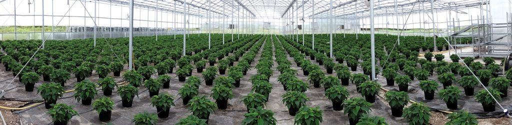 edgewood-greenhouses-panorama