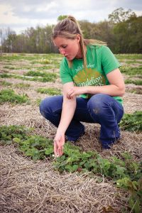 Lindsay Knoebel inspecting strawberries-1