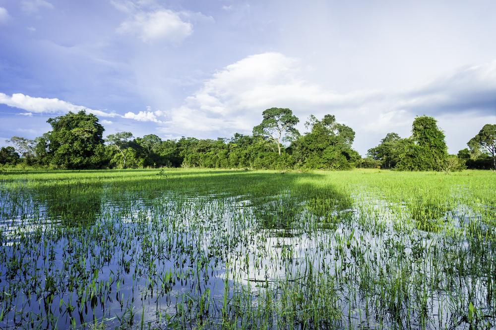 wetlands_background