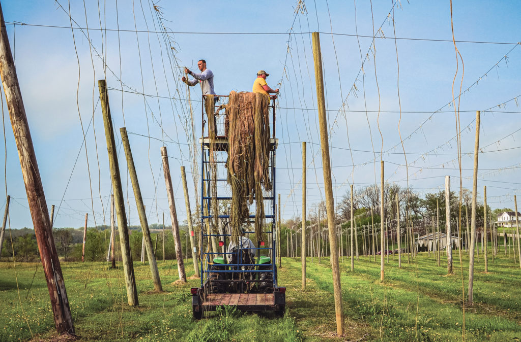 Green County Farm Bureau member Rich Joseph and a friend tie lengths of paper-based twine to the overhead wires. The twine is anchored at ground level and the hop shoot searches for something to climb.